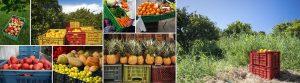 Muebles eco-friendly hechos con contenedores de plástico para fruta plegables